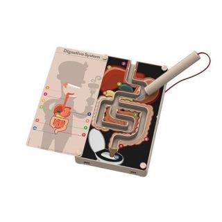 Obrázek 2 produktu KidzLabs Trávící systém