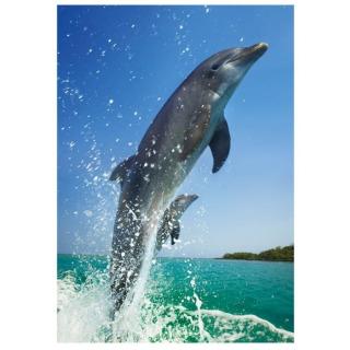 Obrázek 2 produktu Puzzle Delfíni 500 dílků, Dino