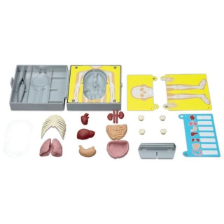 Obrázek 3 produktu KidzLabs Anatomie