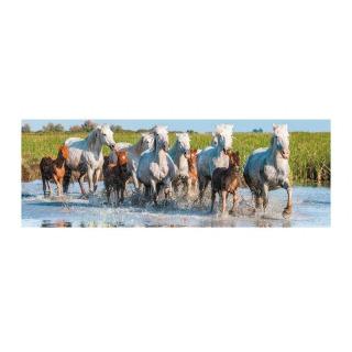Obrázek 2 produktu Puzzle Camargští koně Panorama 150 dílků Dino