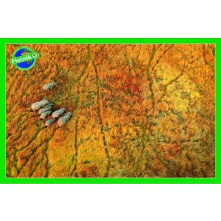 Obrázek 1 produktu Puzzle Na cestě (Sloni) 1000d, Piatnik