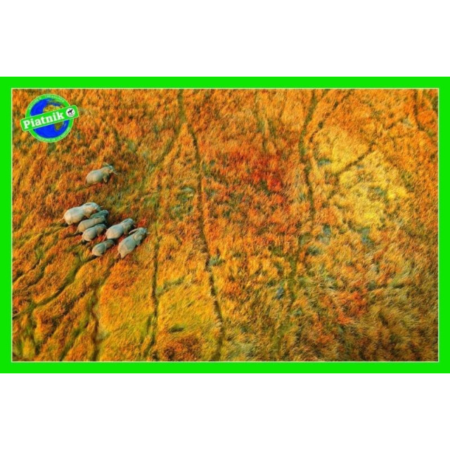 Obrázek produktu Puzzle Na cestě (Sloni) 1000d, Piatnik